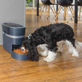 PetSafe WiFi Smart Feed Automatic Dog and Cat Feeder