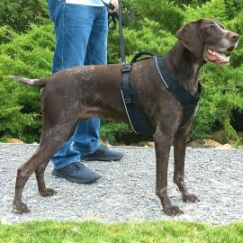 EasySport™ Dog Harness - Large - Black