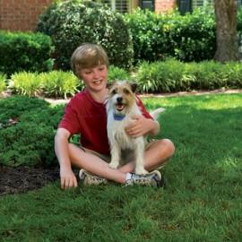 Petsafe - Little Dog Spray Bark Control Collar - PBC19-11796
