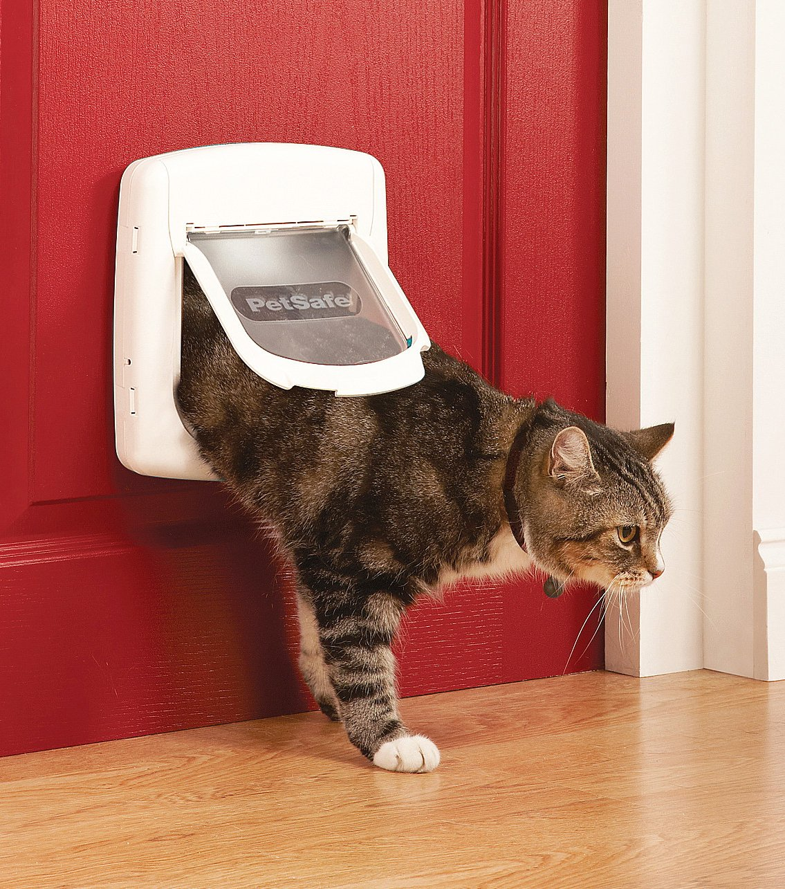 Shows cat with collar magnet using a white cat flap