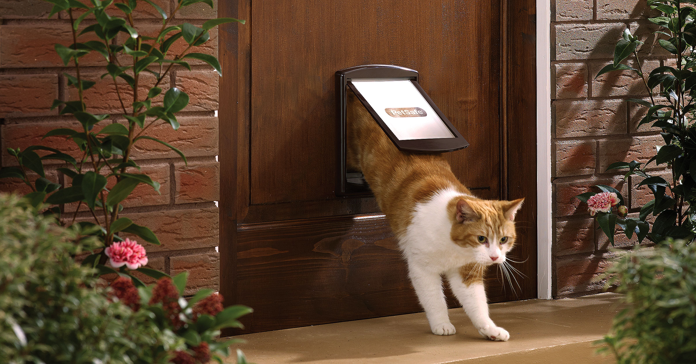 Door designed for duel use with cats and dogs.