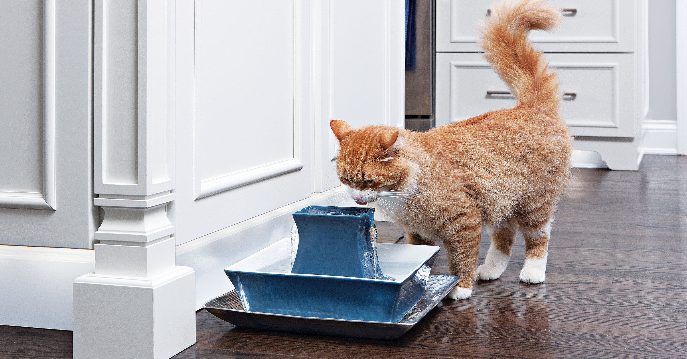 Cat drinking filtered water from a ceramic fountain bowl