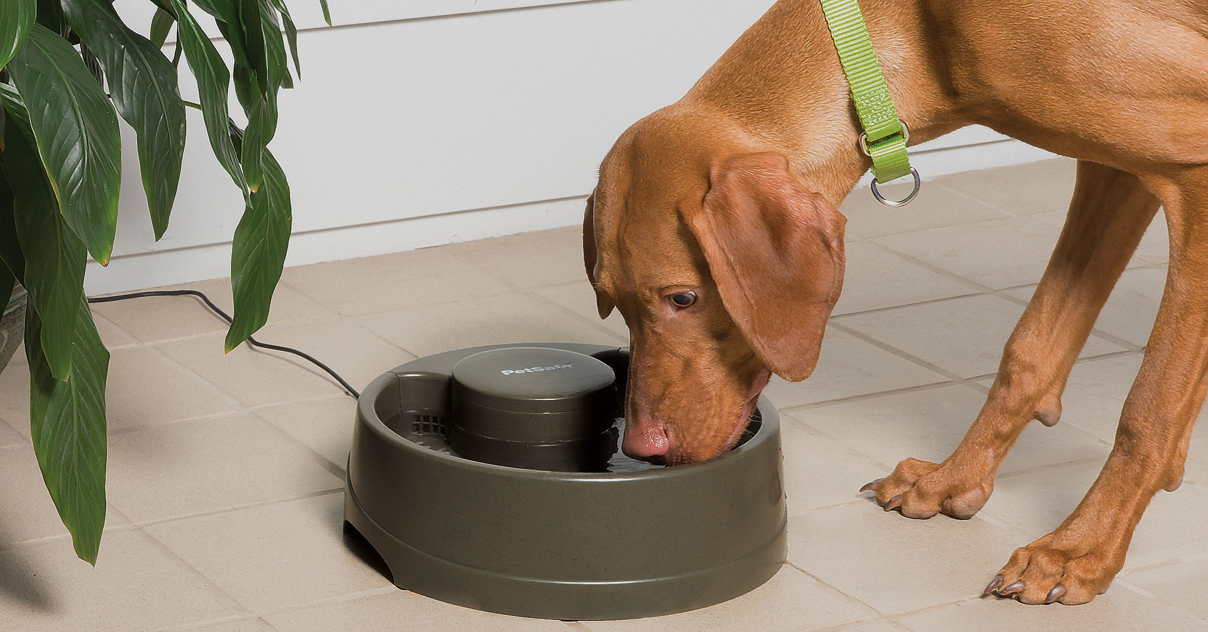 Dag taking a drink from a medium water bowl fountain from Drinkwell