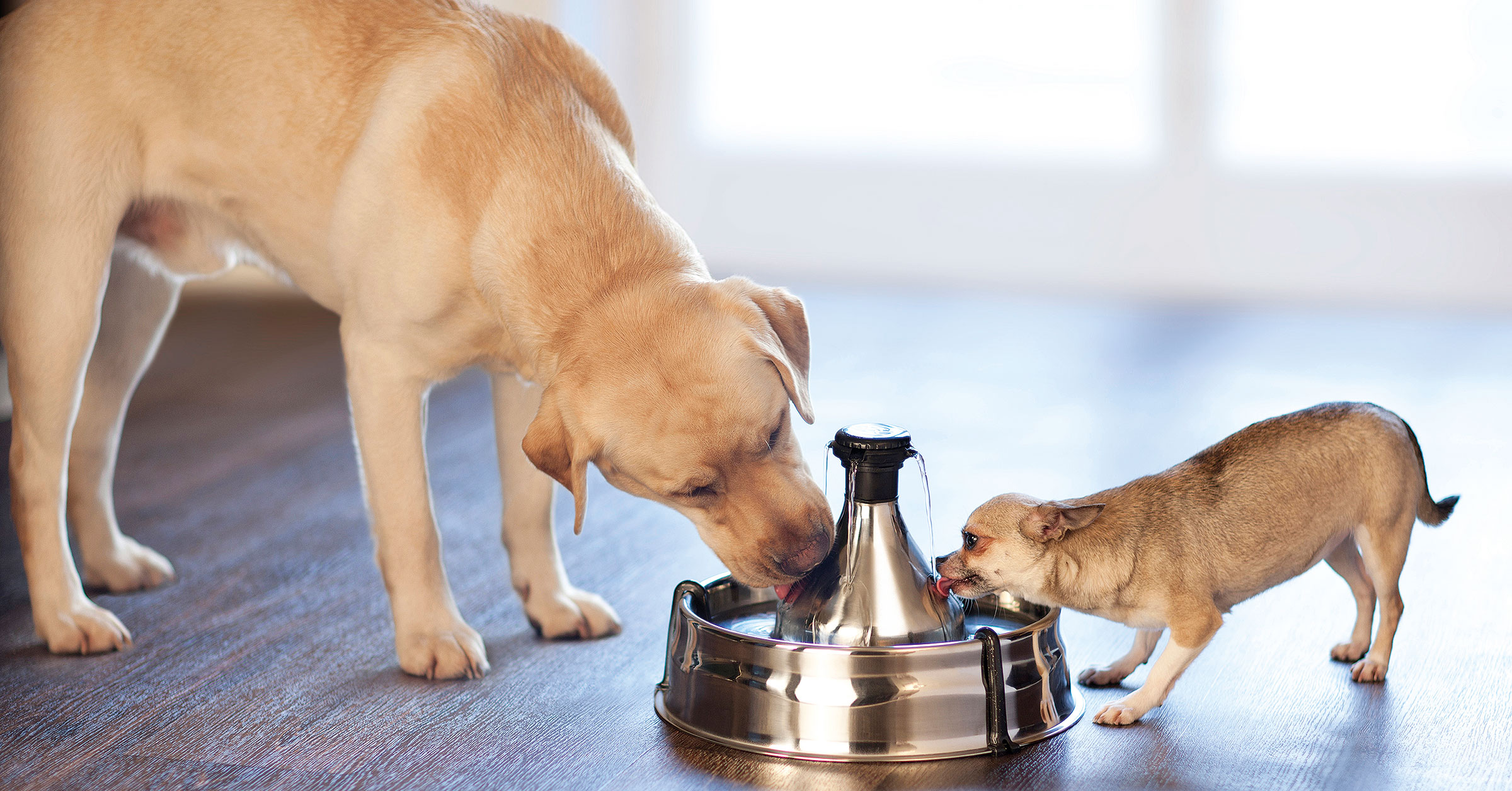Pets benefit from fresh flowing water see the Drinkwell range