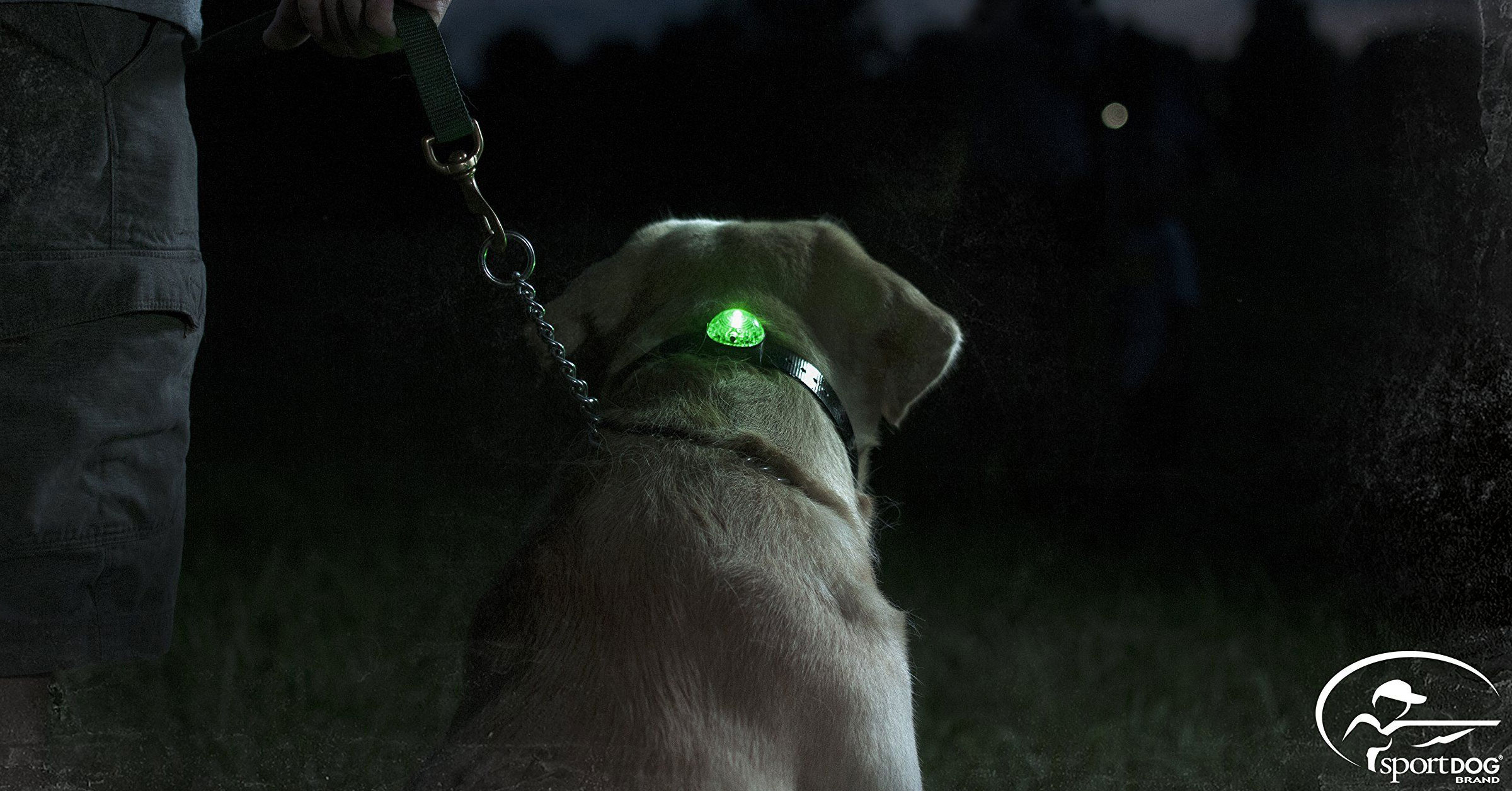 Night time safety collar light for dogs from SportDog